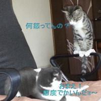 先住猫×新入り子猫(2)