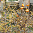 種蒔き第2陣&庭の訪問者