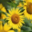 シロバナヤブラン、ヒナギキョウ、他、野の花