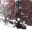 11月に雪も降る