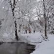 【1月16日更新】2月開催 八幡平ふれあいイベントのご案内