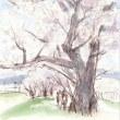 桜を描きに
