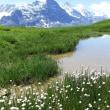 再びスイス花の旅Ⅳ