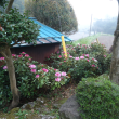 我が家の高嶺の花