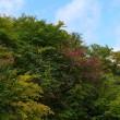 八幡平(初紅葉、9/19)
