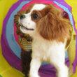 3/24(日)の【ALOHA塾】は、 未病ケアの《Dogscan》  犬のしつけ教室@アロハドギー