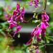 雨の日 秋の野の花