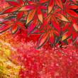 花彩々   #紅葉映え
