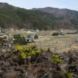 3月18日(日)四賀の福寿草