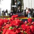 JR大阪駅に秋の花々
