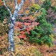 日光竜頭の滝を園地から紅葉狩り  10/15誕生花・・キンモクセイ