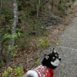 森を歩いた
