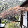 小野 なな NANAONO  nanaono 御開帳ガラス窓の向こう。