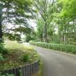 白い竹林 千葉都市緑化植物園