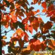 枯れ葉の運動会