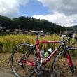 今日は やっぱりロードバイク 「ピナレロ号」 ~初秋の大原 DURA-ACEは,やっぱり軽い~