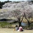 春爛漫!花いっぱい!つくば市!2019! その2