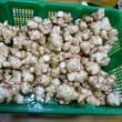 おばさんの料理教室No.2791 リンゴ・干し柿を使った大根なます