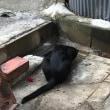 台風18号 家庭内浸水の危機