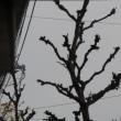 少し落ち着いてきた&街路樹の伐採