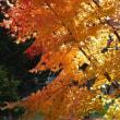 静寂護国神社の紅葉🍂