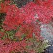 凹んだ沈下橋と黒尊渓谷の紅葉