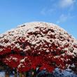 初冬の風物詩・長芋手掘り
