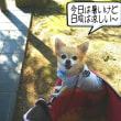青空に映える姫路城
