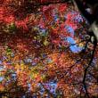 群馬フラワーパークの紅葉2017