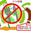 ■刀豆(なたまめ)フリー画像■(ご自由にお使いください)