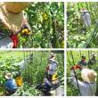 夏野菜の芽かき等の管理