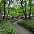 深緑の深大寺植物園