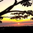 清見台からの夕景