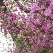 花のじゅうたん 永沢寺へ