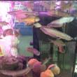 シティパークでペットショー (魚類とか……)