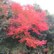 秋といえば…(*^^)v