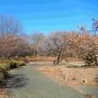 静寂そのもの、昭和記念公園