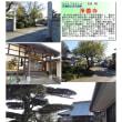花巡り 「桜-その495」 浄善寺