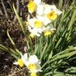 春の陽につつまれて