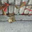 小さな庭で紅葉を