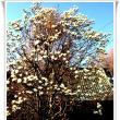 百花繚乱の春