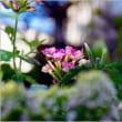 我が家の庭に咲く花々・・・。