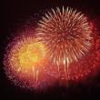 花火とプルメリア