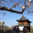 桜開花が早まる福岡城周辺 占いスクールの時節到来