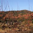 師走の柿園と紅葉の筑波山