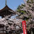 京都桜紀行その2(西陣東)