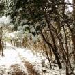 うんざりする雪