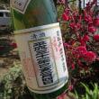 司牡丹の立春朝搾り