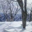 雪山で越冬充電中です。