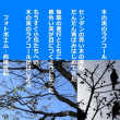 木の実のラブコール